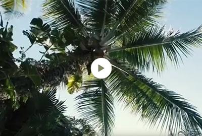 Travel | Tulum Trip
